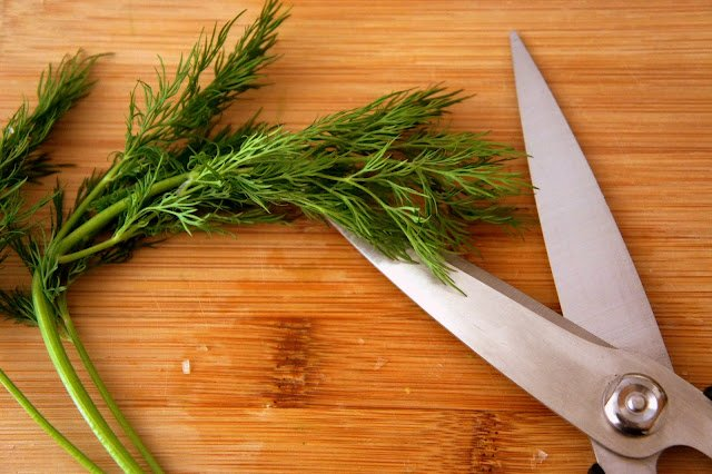 Fresh dill on a cutting board next to a pair of scissors