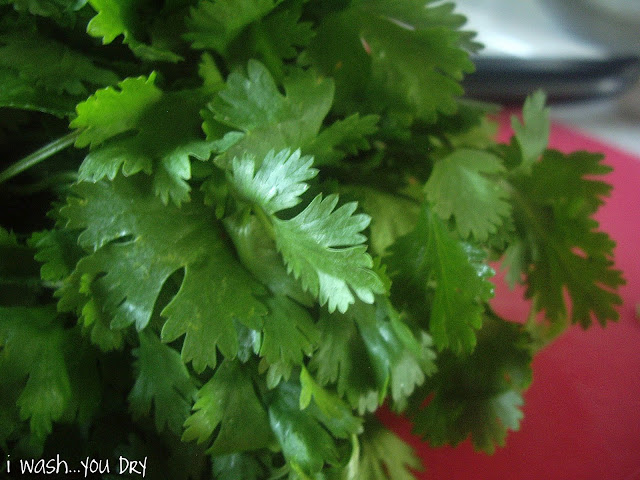 A close up of a bunch of cilantro.