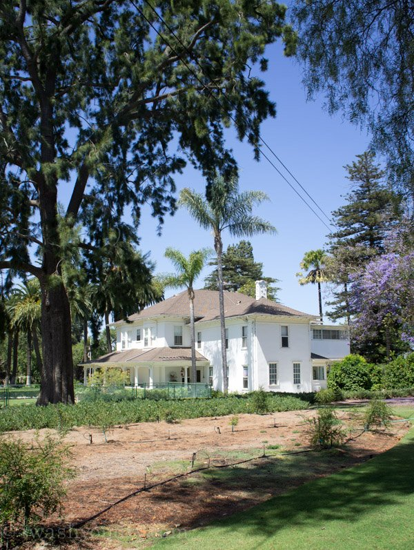 A White House surrounded by tall trees