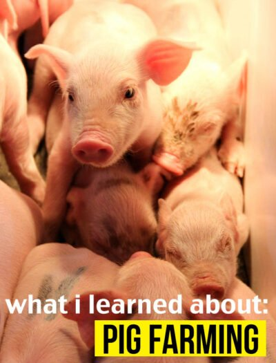 What I learned about Pig Farming!