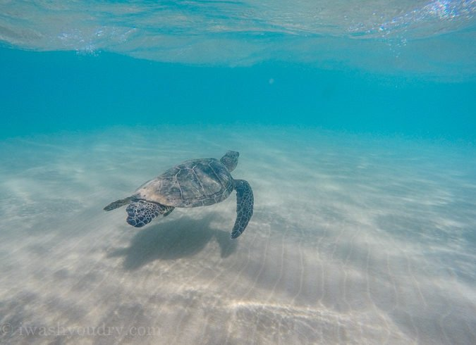 Spot several sea turtles at the Maluaka Beach in Maui, Hawaii!